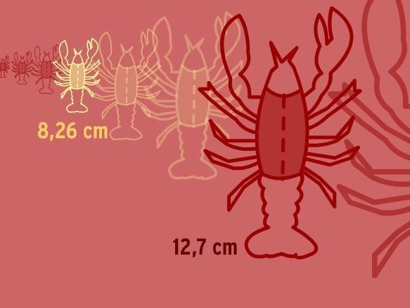 Image for Inégalités