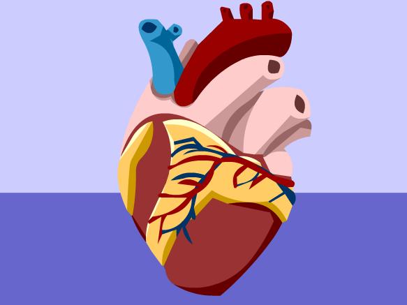 Image for Appareil circulatoire
