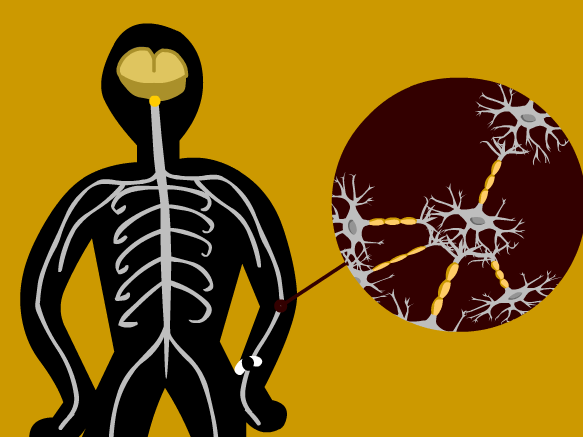 Image for Neurones