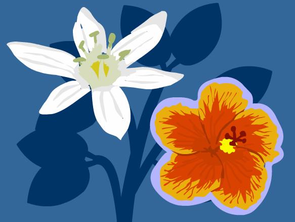 Image for Plantes à graines