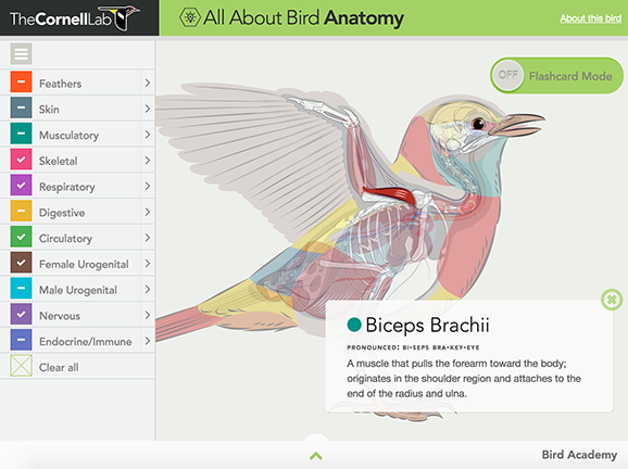 All About Bird Anatomy Lesson Plans and Lesson Ideas | BrainPOP ...