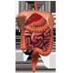 Build-A-Body: Digestive System