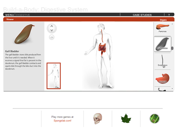 Slideshow image for Build-A-Body: Digestive System