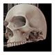 Build-A-Body: Skeletal System