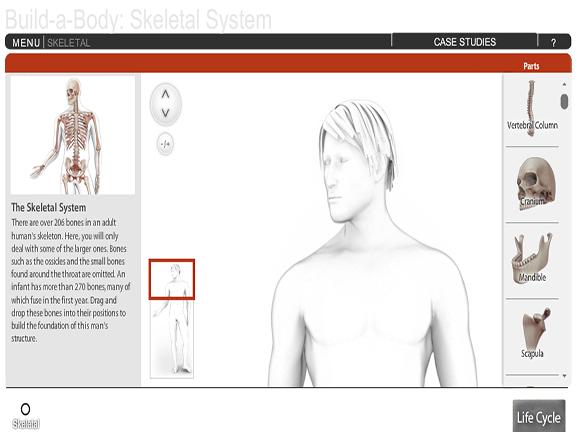 Build-A-Body: Skeletal System - GameUp - BrainPOP