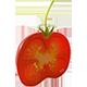 Build-A-Plant: Tomato