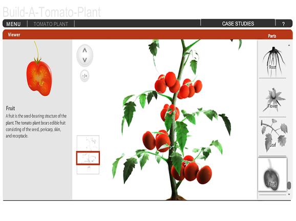 Build A Plant Tomato Lesson Plans And Lesson Ideas Brainpop Educators