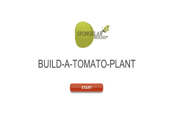 Slideshow image for Build-A-Plant: Tomato