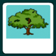 Sortify: Tree of Life