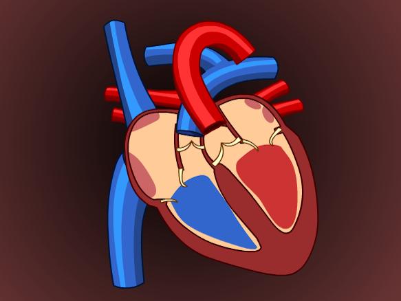 Heart Brainpop