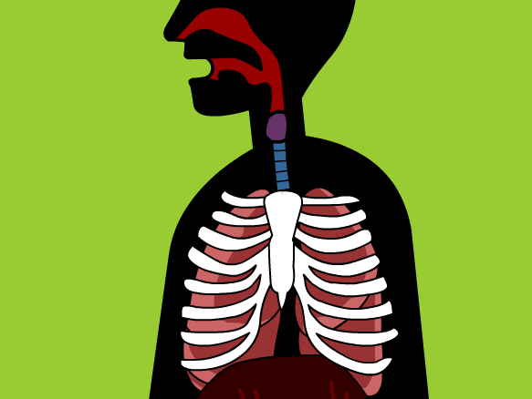 Image for Respiratory System