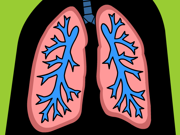 Respiratory system brainpop movie player require flash ccuart Choice Image