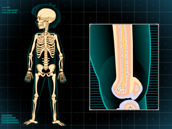 Skeleton - BrainPOP