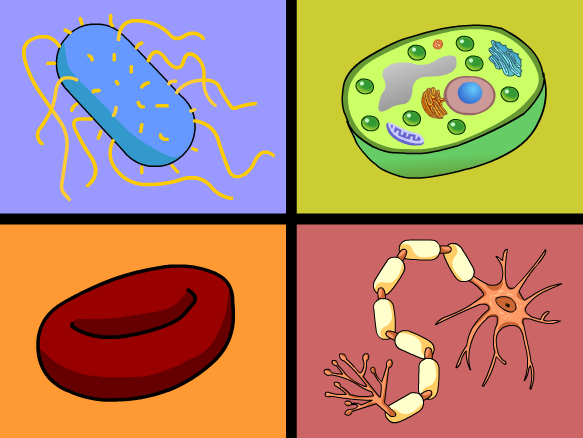 Cell Specialization Lesson Plans and Lesson Ideas – Cell Specialization Worksheet