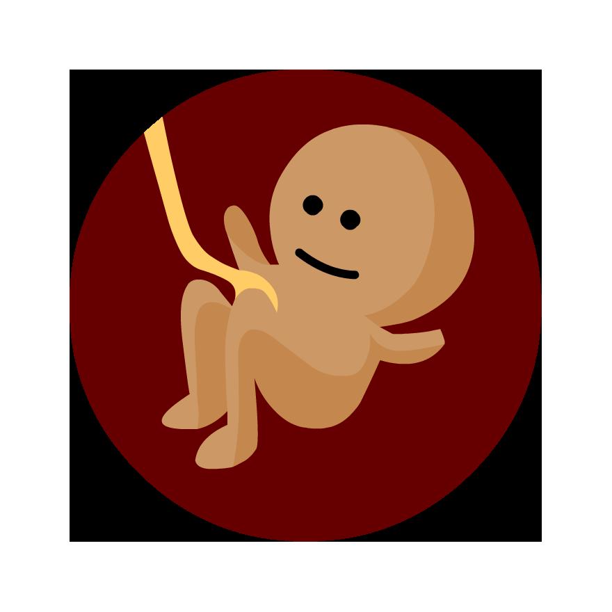 Pregnancy and Fetal Development