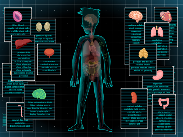 Image for Body Systems