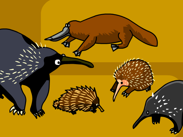 Image for Monotremas