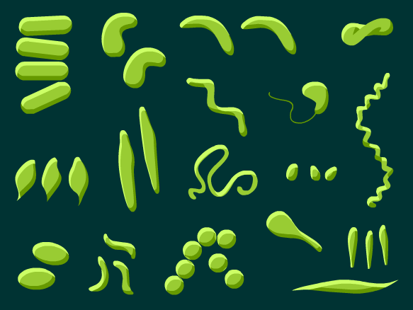 Image for Bacterias