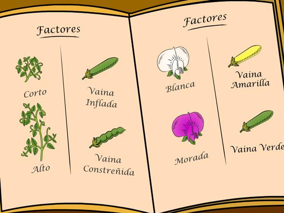Image for Genética