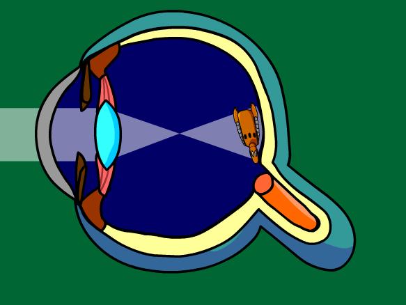 Image for Problemas de la Vista