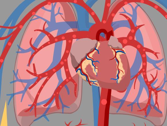 Image for Corazón