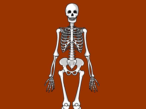 Image for Esqueleto