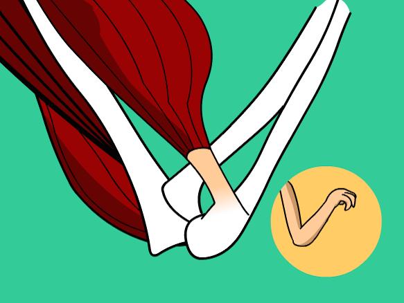 Image for Músculos