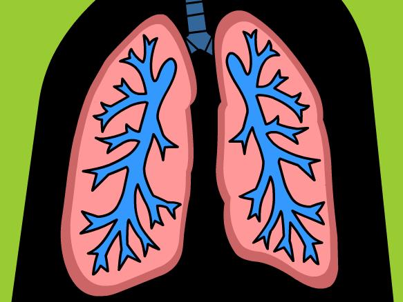 Image for Sistema Respiratorio
