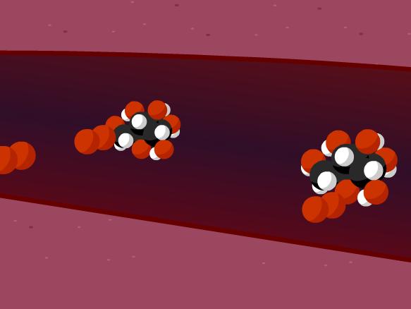 Image for Cellular Respiration