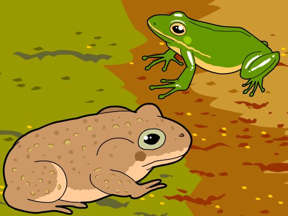 Amphibians Brainpop