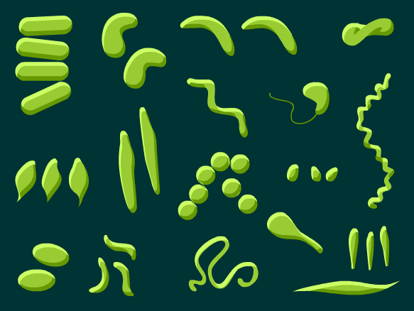 Image for Bacteria