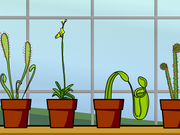 Image for Carnivorous Plants