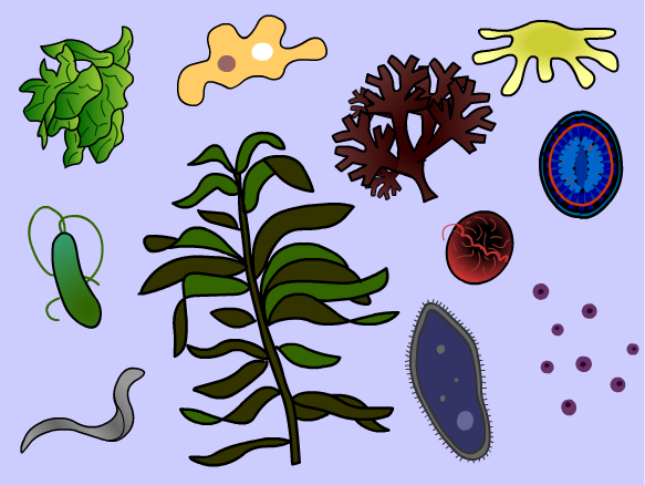 Image for Protists