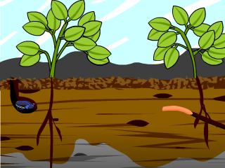 soil lesson plans and lesson ideas brainpop educators
