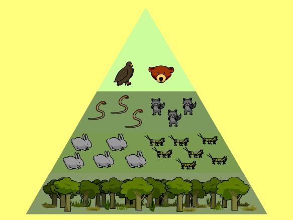 Energy Pyramid BrainPOP – Energy Pyramid Worksheet
