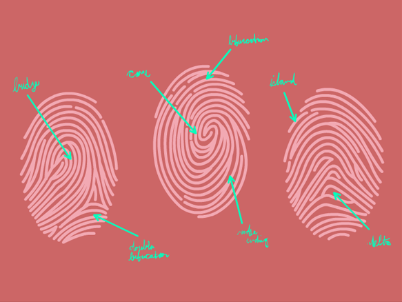 Image for Fingerprints