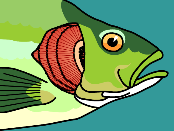 Gills lesson plans and lesson ideas brainpop educators for Do all fish have gills